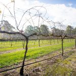 Long Point Vineyard, Port Macquarie NSW. Pic: Lindsay Moller Productions